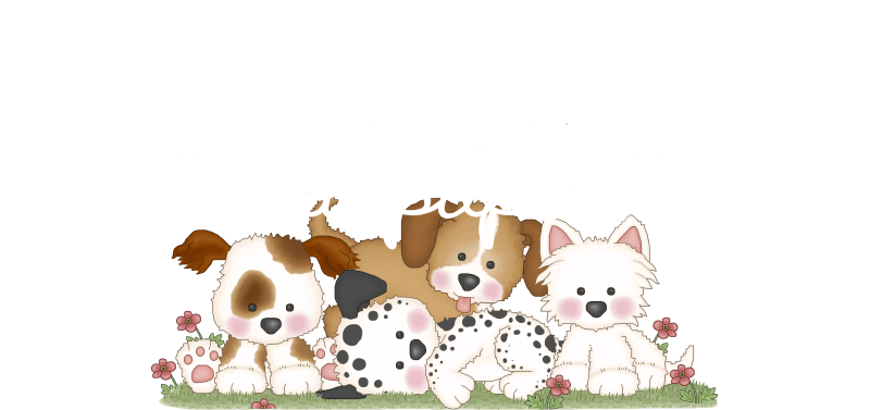 Hair Pups is your source for AKC Havanese - AKC chocolate